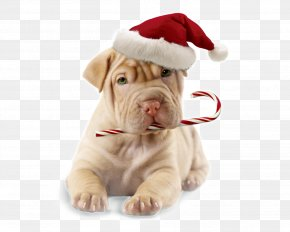 Puppy - Puppy Boxer Dog Grooming Christmas Santa Claus PNG