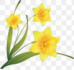 Watercolor Painting Daffodil Clip Art PNG