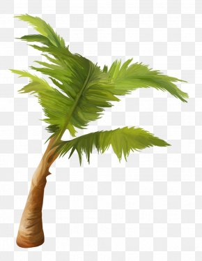 Hand Painted - Arecaceae Asian Palmyra Palm Coconut Plant Tree PNG