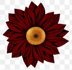Red Sunflower - Flower Drawing Art Clip Art PNG