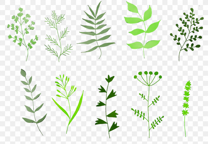 Leaf Plant Stem Herbal Medicine Grasses Herb, PNG, 1280x890px, Watercolor, Commodity, Geometry, Grasses, Herb Download Free
