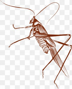 Brown Cricket - Brown Euclidean Vector PNG
