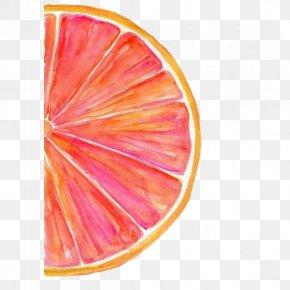 Red Grapefruit - Grapefruit Watercolor Painting Watercolour Tips Art PNG