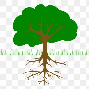 Tree Branch - The Great Kapok Tree Clip Art PNG
