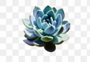 Plant - Succulent Plant Flowerpot Template PNG