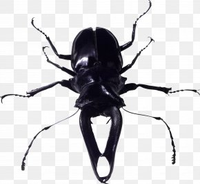 Insect Bug Image - Beetle Look At Insects PNG