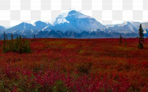 United States Denali National Park Nine - Denali Wonder Lake Yosemite National Park Yellowstone National Park Grand Teton National Park PNG