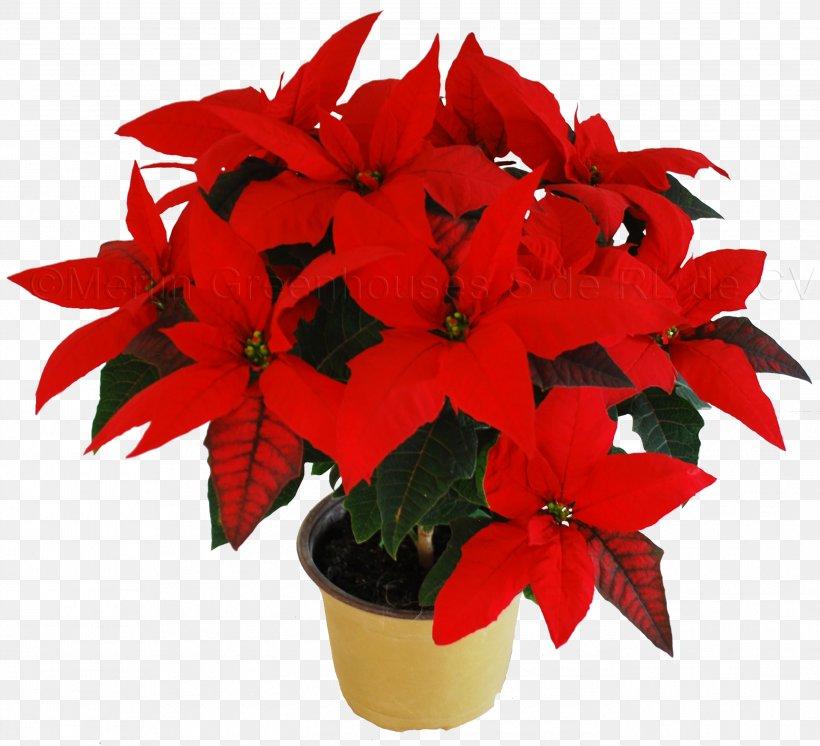 Poinsettia Flower Christmas Plant Clip Art Png 2738x2494px Poinsettia Annual Plant Cactaceae Christmas Colonial Flower Shop