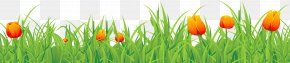 Grass Ground With Tulips Clipart - Tulip Time Festival PNG