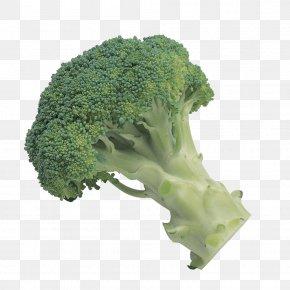 Green Broccoli - Broccoli Slaw Vegetable Clip Art PNG