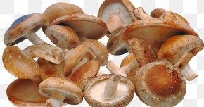 Shiitake Mushroom - Shiitake Edible Mushroom Fungus Health PNG