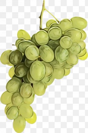 Grape Seed Oil Flower - Grape Cartoon PNG