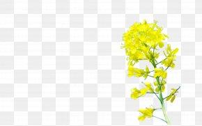 Chrysanthemum - Yellow Floral Design Pattern PNG