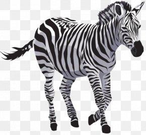 Zebra File - Zebra PNG
