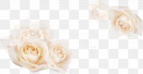 White Roses - Garden Roses Floral Design Cut Flowers Flower Bouquet PNG