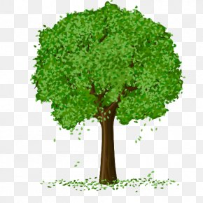 Spring Tree Vector PNG