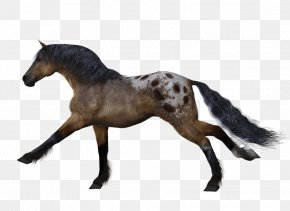 Appaloosa Images Appaloosa Transparent Png Free Download