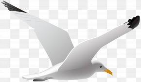Seagull Clip Art Image - Gulls Bird Clip Art PNG