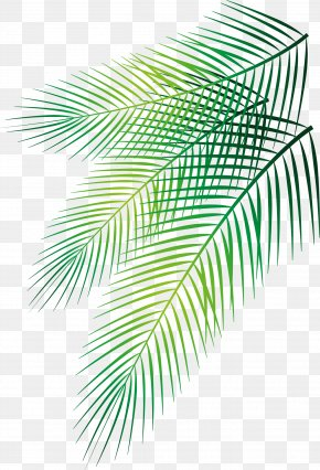 Vector Hand-painted Palm Leaf - Leaf Arecaceae Date Palm PNG