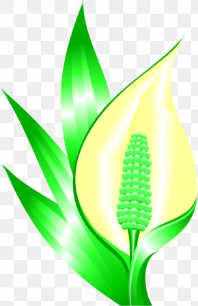 Leaf - Leaf Grasses Plant Stem Commodity PNG