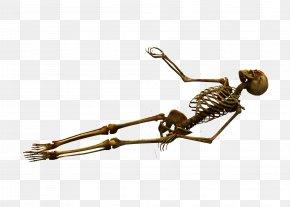 Skeleton - Human Skeleton Bone Skull PNG
