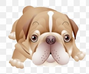Glitters - Toy Bulldog Puppy Dog Breed Companion Dog PNG