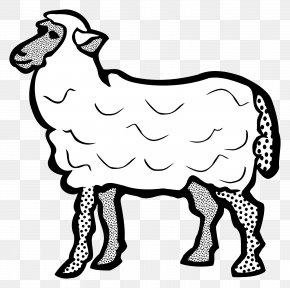 Cartoon Sheep - Cotswold Sheep Line Art Drawing Clip Art PNG