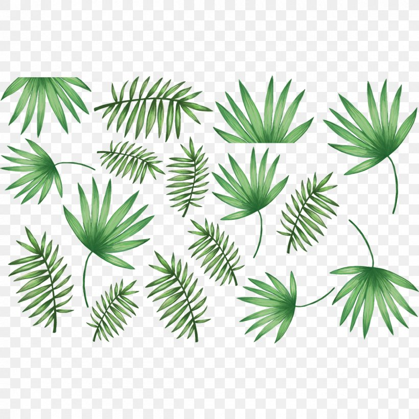 Arecaceae Palm Branch Leaf Sticker Wall Decal, PNG, 1200x1200px, Arecaceae, Arecales, Blue, Branch, Coconut Download Free