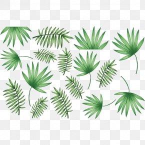 Leaf - Arecaceae Palm Branch Leaf Sticker Wall Decal PNG