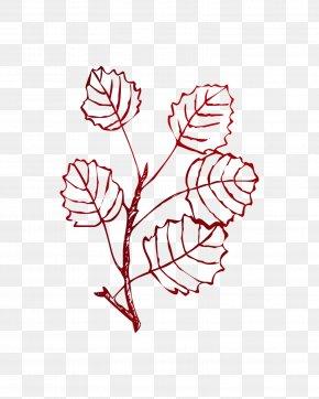 Euclidean Vector Leaf Illustration Plant Stem Plants PNG