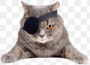 Cat - Cat Eyepatch Felidae Stock Photography PNG