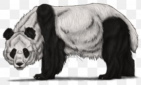 Giant Panda - The Giant Panda Bear Drawing Sketch PNG