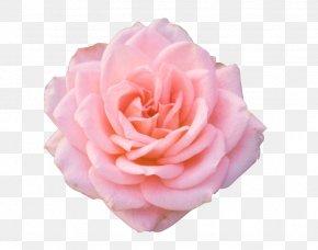 Mothers Day Gift Clip Art - Rose Flower Desktop Wallpaper Clip Art PNG