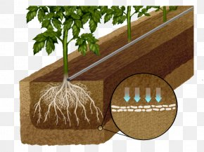 Ly Nước - Drip Irrigation Soil Crop Water Agriculture PNG