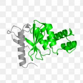 Leaf Product Design Clip Art Plant Stem PNG