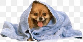 Towel Dog - Pomeranian Poodle Puppy Towel Dog Grooming PNG