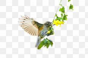 Beautiful Birds Flying - Bird Flight Beak PNG