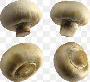 Mushroom - Common Mushroom Fungus Clip Art PNG