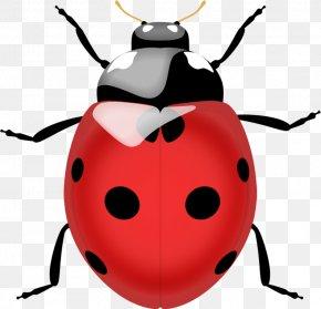 Ladybug Image - Beetle Ladybird Lady Bug Realtors Edrina Fitting, FL Lady Bug Coccinella Septempunctata PNG