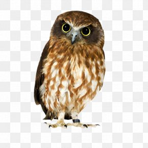Owl - Owl Hawk Strix Newarensis Falcon Our Feathered Friends PNG
