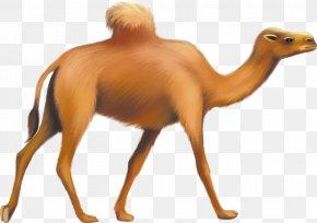 Hand-painted Camel - Bactrian Camel Dromedary Horse Giraffe PNG