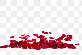 Red Rose Petals Image - Rose Petal Stock Photography Flower Stock.xchng PNG