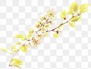 Pedicel Botany - Floral Spring Flowers PNG