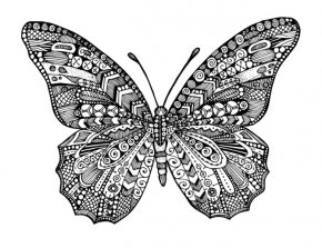 Butterfly - Monarch Butterfly Coloring Book Drawing PNG