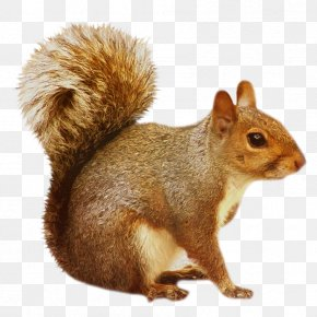 Transparent Brown Squirrel - Squirrel Clip Art PNG