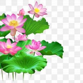 Lotus - Wall Lotus Wallpaper PNG