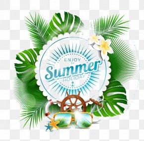 Summer Elements - Leaf Arecaceae PNG