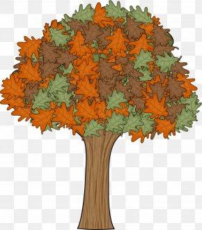 Tree - TeachersPayTeachers Lesson Hard And Soft G Word Sort PNG