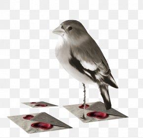 Bird - Bird Animal Clip Art PNG
