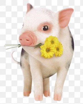 Pet Pig - Dog Hogs And Pigs Pet Domestication PNG